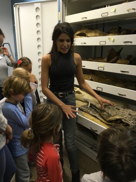 AMNH Science and Nature Program Museum Investigations in Science
