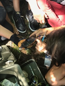 Blackrock Forest summer Science Camp - Cold Blooded Creatures!