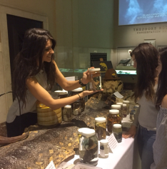 ID Day at the AMNH
